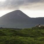 Croagh-Patrick_sheep