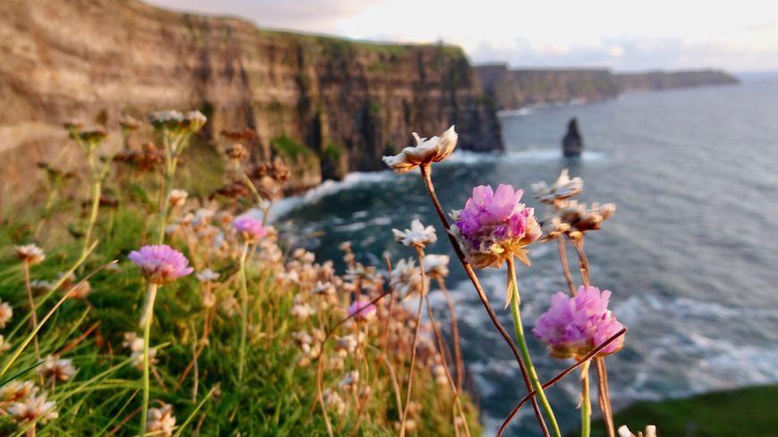 cliffs of moher visit ireland s famous cliffs wilderness ireland