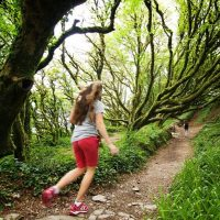 A walk through enchanted woods of the Ring of Kerry