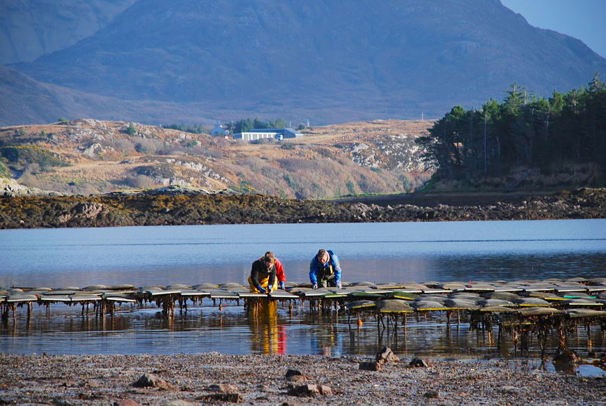Oyster farm and tasting Connemara