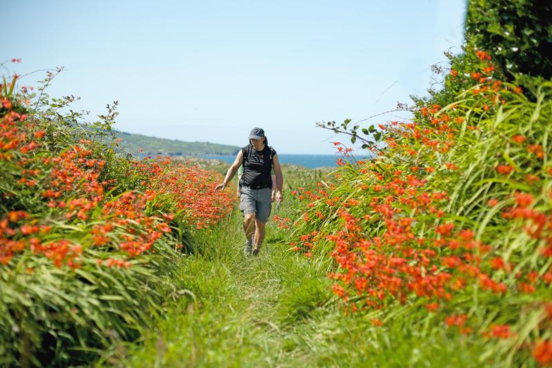 Hiking Ireland island hopping Cape Clear